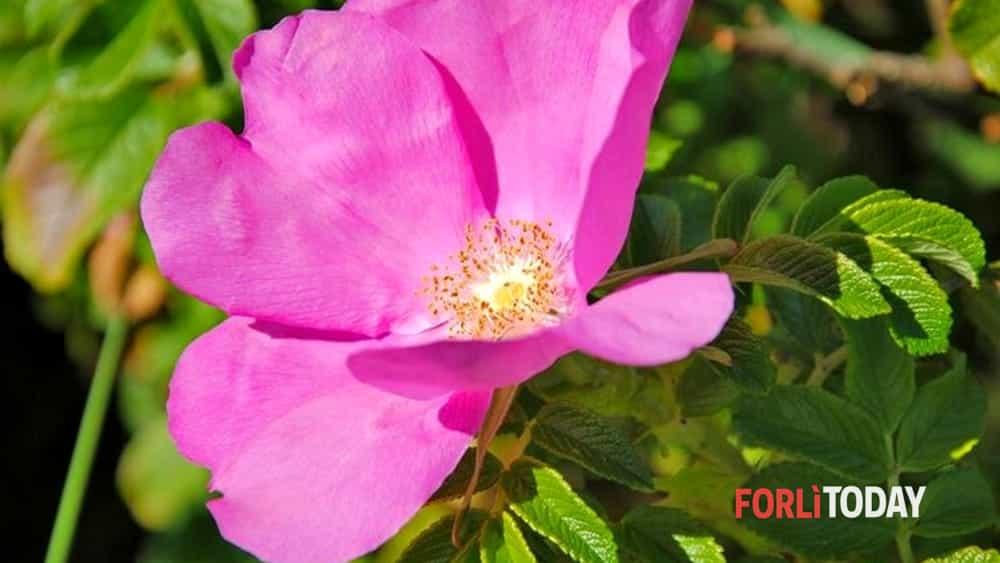 Visite Guidate Alla Scoperta Del Giardino Botanico Di